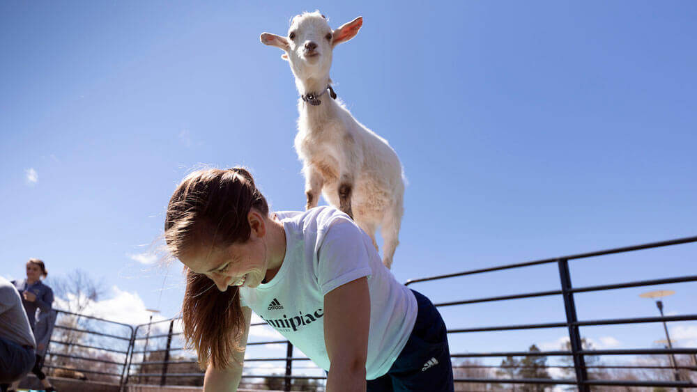 Quinnipiac University graduate students do yoga with goats from Nadeau Farm Wednesday, April 10, 2019 on the lawn of The Center for Medicine, Nursing and Health Sciences on Quinnipiac's North Haven Campus. The event was part of programming for Graduate Appreciation Week.
